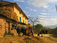 Nagarkot house and cattle.jpg