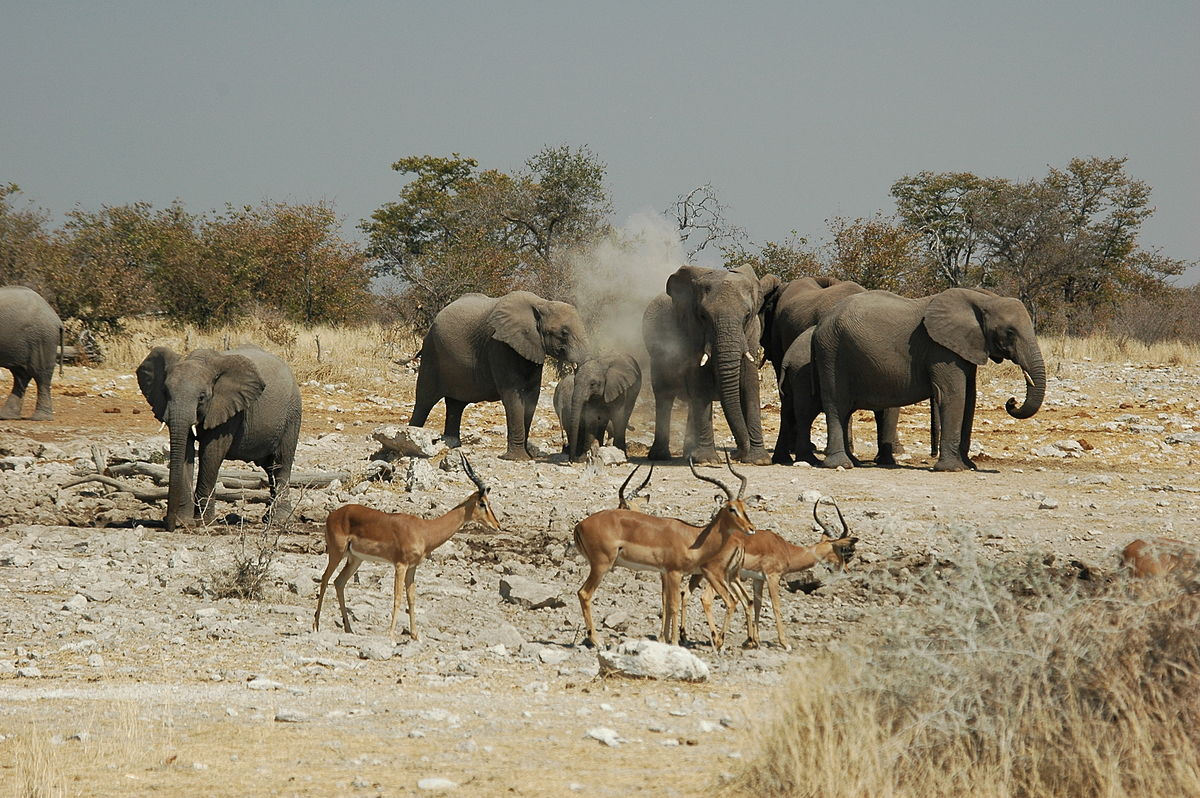 wildtierbestand in namibia wikipedia. Black Bedroom Furniture Sets. Home Design Ideas