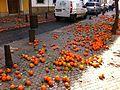 Naranjas maduras en la calle.jpg