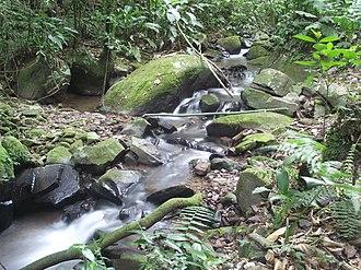 Serra do Itajaí National Park - Image: Nascente