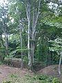 Natura Sarulesti, Buzau.jpg
