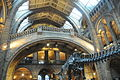 Natural History Museum, London, Central Hall (1).JPG