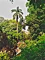 Natural beauty of Baldha Garden.jpg