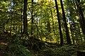 Nature reserve Ptaci stena in autumn 2011 (23).JPG