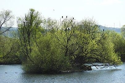"Naturschutzgebiet ""In den Weiden bei Blankenheim"" (2).jpg"