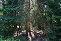 Naturschutzgebiet Trunnenmoor IMG 2677.jpg