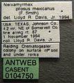 Neivamyrmex pilosus casent0104750 label 1.jpg