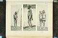 Nova Guinea - Vol 7 - Ethnographie - 1913 - Tafel 40-1.jpg