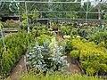 Oázis Kertészet, a parkoló felől nézve, 2019 Törökvész.jpg