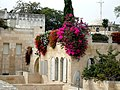 Old Jerusalem flowers on the roof of the cardo.jpg
