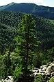 On the top of tree - panoramio.jpg