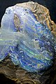 Opal at Senckenberg Natural History Museum.jpg