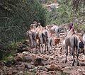 Oromo Wealth, Sof Omer, Ethiopia (14496644120).jpg