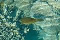 Ostraciidae (32294905441).jpg