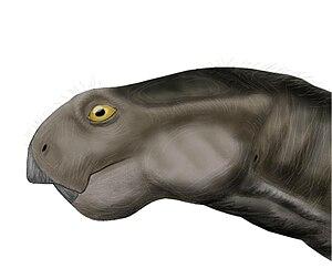 Oudenodon - Restoration of Oudenodon bainii