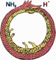 Ouroboroszwitterion.png