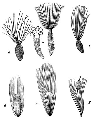 PSM V19 D182 Pappus of various plants.jpg