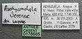 Pachycondyla verenae casent0178685 label 1.jpg