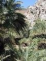 Palm forest of Preveli, 051136.jpg