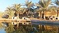 Palm tree reflection in the Riverنخل های زیبا در حوالی کارون - panoramio.jpg