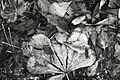 Paolo Monti - Serie fotografica (Milano, 1967) - BEIC 6329348.jpg