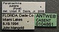 Paratrechina pubens casent0104861 label 1.jpg
