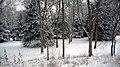 Parc de Bois-Préau sous la neige - panoramio (3).jpg