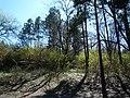 """Park """"Stratesh""""-Lovech - panoramio (1).jpg"""