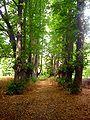 Park Dranske-Lancken - Mittelachse 2.jpg
