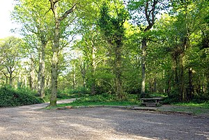 Appledore, Kent -  Park Wood Picnic Site