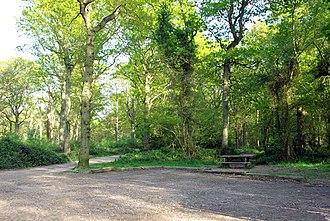Appledore, Kent - Park Wood Picnic Site