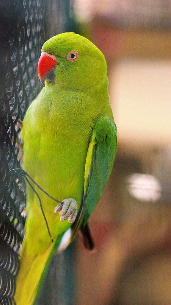 Parrot.De