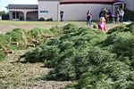 Peltzer Pines Tree Farm donates 150 trees to service members and their families 131216-M-EG514-013.jpg