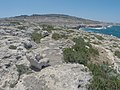 Pembroke, Malta - panoramio (36).jpg