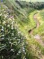 Pembrokeshire coastal path - geograph.org.uk - 185052.jpg