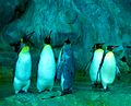 Penguins! (JURONG BIRD PARK-SINGAPORE) (6025142541).jpg