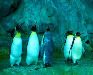 Jurong Bird Park - Penguins