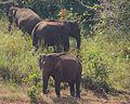 Periyar Tiger Reserve (11876045334).jpg