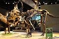 Perot Museum Pachyrhinosaurus.jpg