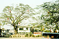 Philippines December 1982, Christmas decoration on the trees.jpg