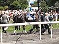 Phola (horse).jpg