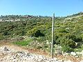 PikiWiki Israel 38597 Cranes Land of Israel.jpg