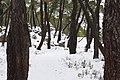 Pinar ^ Nieve - panoramio (13).jpg
