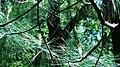 Pine Sparklers 3 (213316561).jpeg