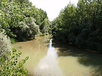 Riparian zone - Thick riparian vegetation along the Pisuerga River in Spain