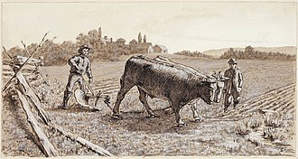 Ox - Ploughing with Oxen, Nova Scotia, Canada, 1881.
