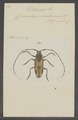 Potemnemus - Print - Iconographia Zoologica - Special Collections University of Amsterdam - UBAINV0274 034 06 0005.tif