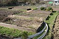Potterton's allotments, Warwick - geograph.org.uk - 1227830.jpg