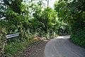 Powerstock - Country Lane (geograph 5505539).jpg