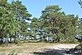 Priedes, Kolkas pagasts, Dundagas novads, Latvia - panoramio.jpg